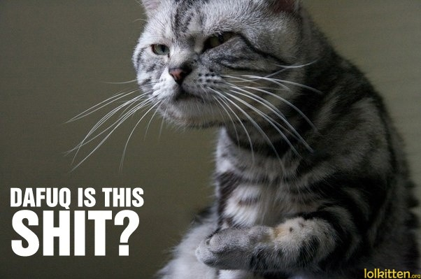 [Image: funny-cat-lolcat-dafuq.jpg]