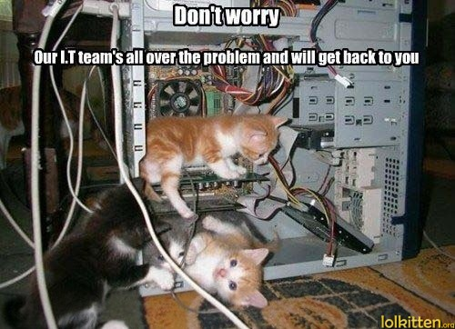 funny-cats-lolcats-it-team.jpg