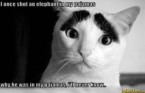funny-cat-lolcat-life-story.jpg