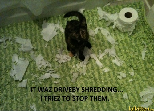 How To Stop Cat From Shredding Paper