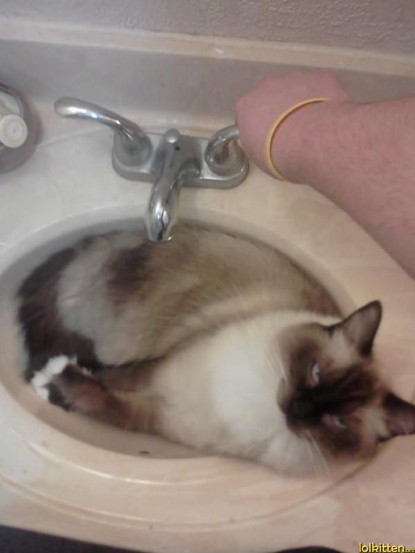 Cat is going to get wet...