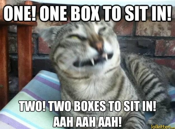 ONE! ONE BOX TO SIT IN! TWO! TWO BOXES TO SIT IN! AAH AAH AAH!