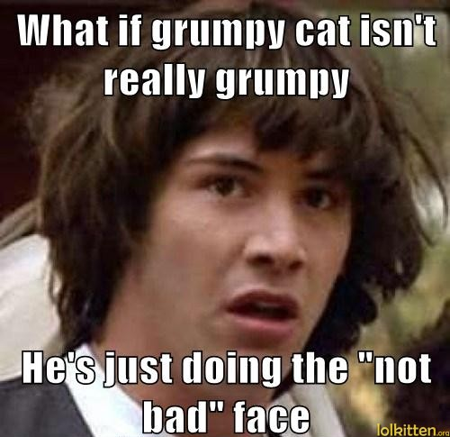 Funny Cat Lolcat Truth About Grumpy Cat