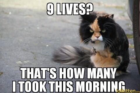 9 LIVES? THAT'S HOW MANY I TOOK THIS MORNING