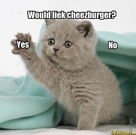 Would you liek cheezburger? Yes / No
