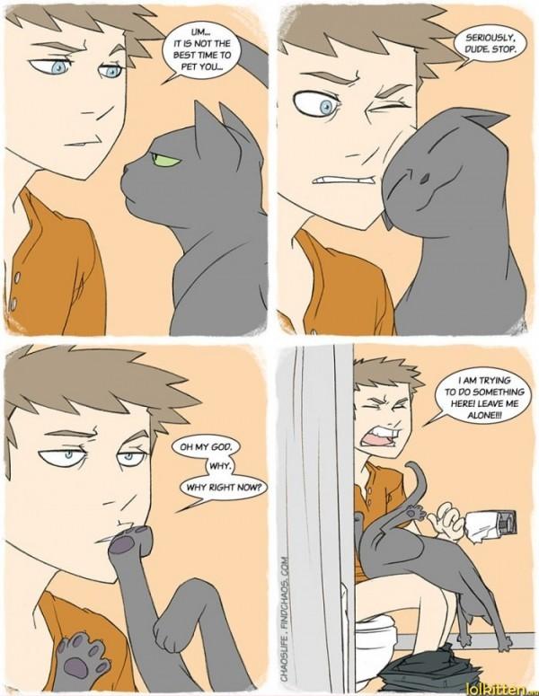 Bad Pet Timing