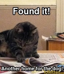 Found it! Another home for the dog!