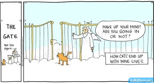 The Myth of Cats with Nine Lives
