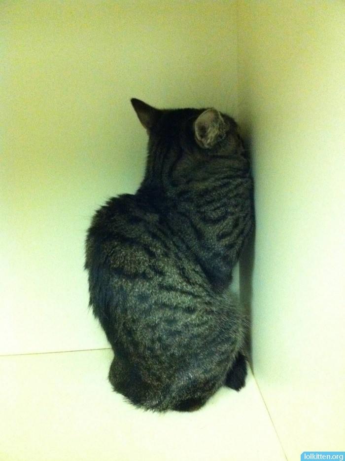 Cat in corner