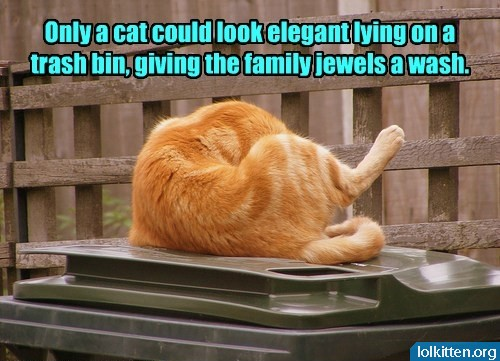 Only a cat could look elegant lying on a trash bin, giving the family jewels a wash.