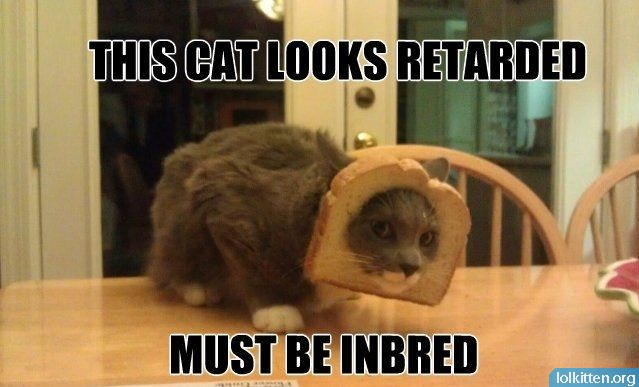 THIS CAT LOOKS RETARDED - MUST BE INBRED