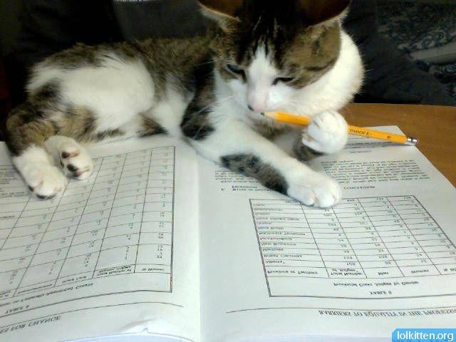 Cat doing homework