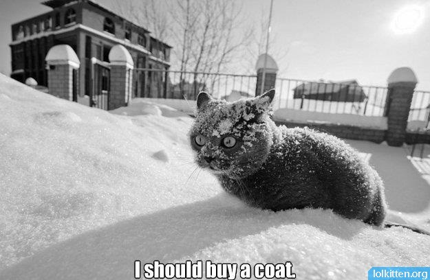 I should buy a coat.