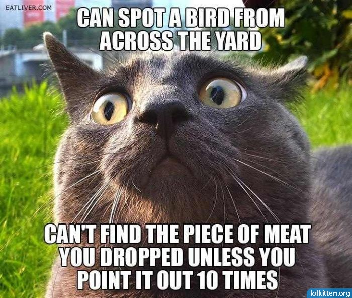 CAN SPOT A BIRD FROM ACROSS THE YARD - CAN'T FIND THE PIECE OF MEAT YOU DROPPED UNLESS YOU POINT IT OUT 10 TIMES