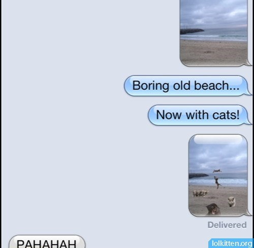 Beach With Cats