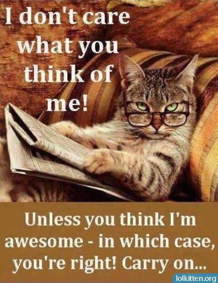 I don't care what you think of me! Unless you think I'm awesome - in which case, you're right! Carry on...