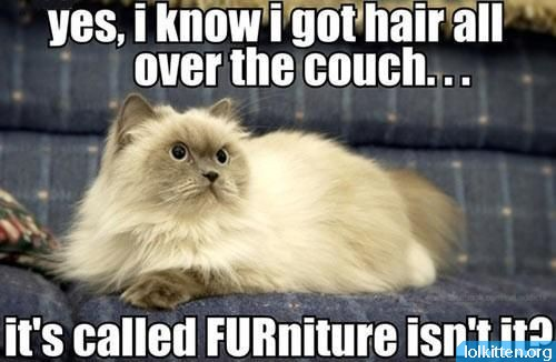 yes, i know i got hair all over the couch... it's called FURniture, isn't it?