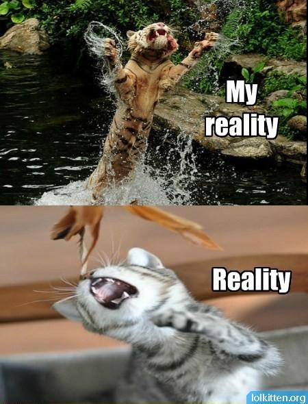 My reality - Reality