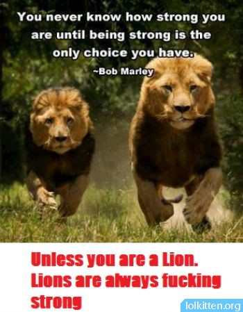 Lions are always strong.