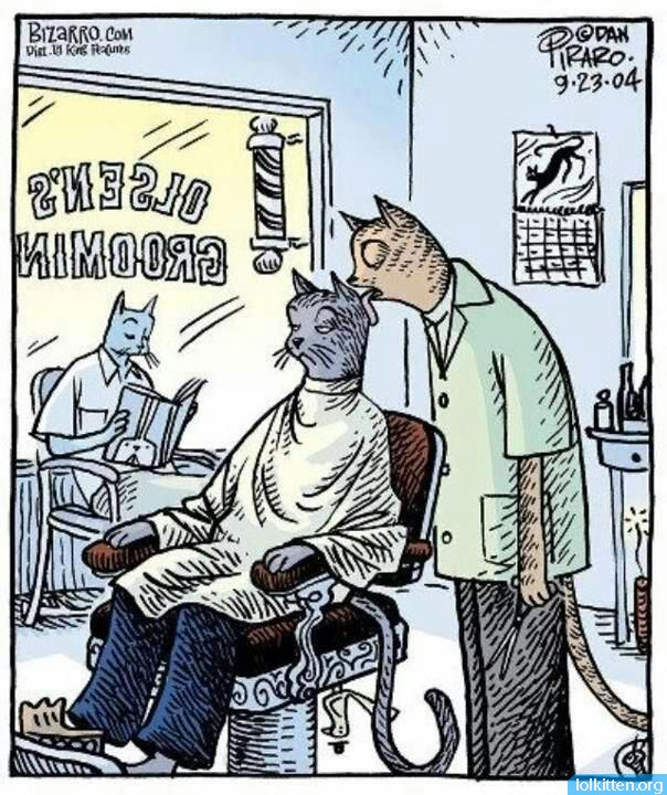 Cat Barber Shop