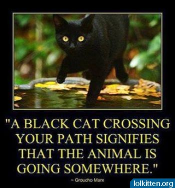 Black cat crossing street