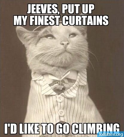 JEEVES, PUT UP MY FINEST CURTAINS - I'D LIKE TO GO CLIMBING