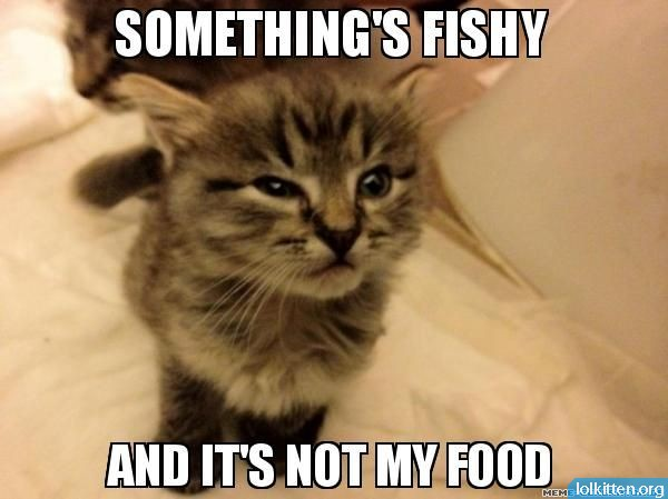 SOMETHING'S FISHY - AND IT'S NOT MY FOOD