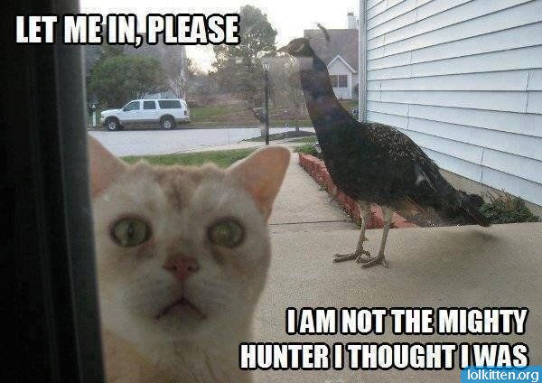 LET ME IN, PLEASE - I AM NOT THE MIGHTY HUNTER I THOUGHT I WAS