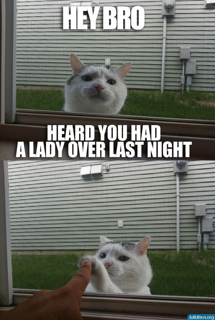 HEY BRO - HEARD YOU HAD A LADY OVER LAST NIGHT