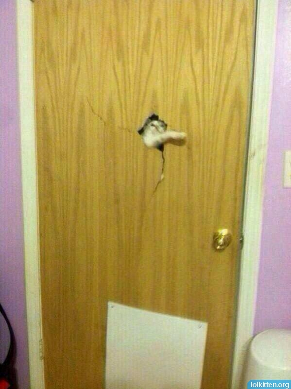 Cat crushes door