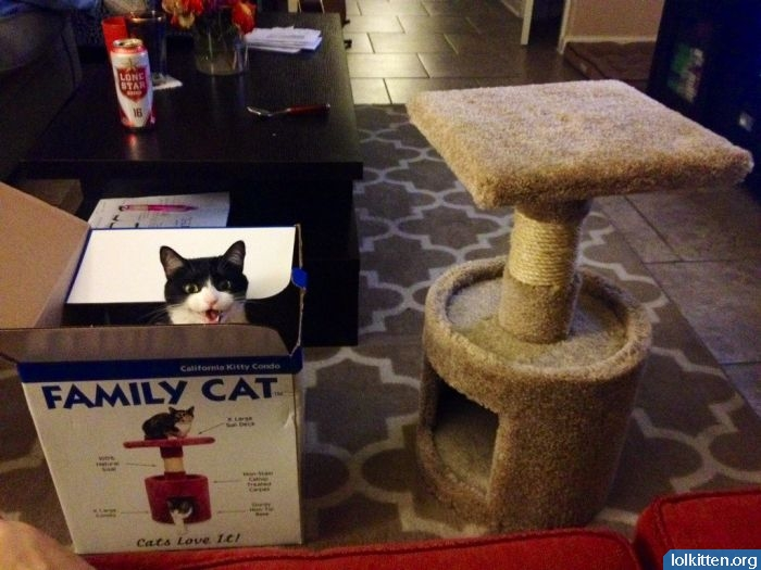 Family Cat in a box