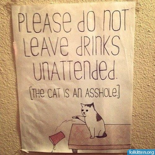 please do not leave drinks unattended - the cat is an asshole