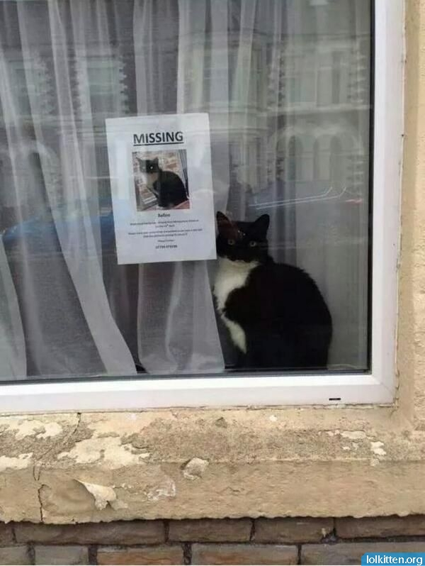 Missing cat next to poster in window